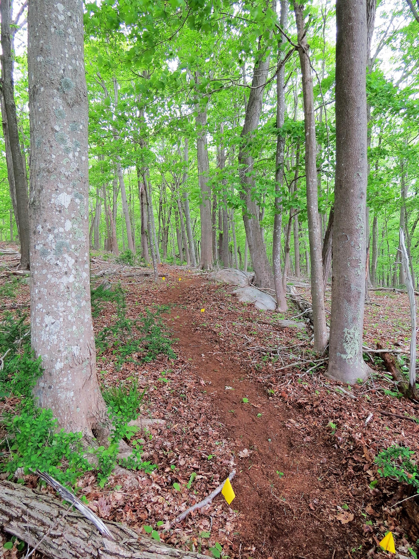 Guetliweg Preserve trail